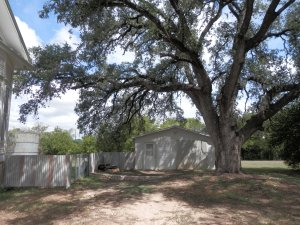 In Harmony yoga studio under one of our big oak trees.